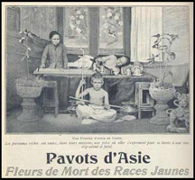Photo :drogue pavot